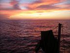 Manta Ray Sunset