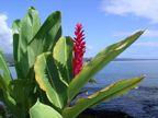 Flora in Hilo