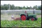 Diederik Steyaert - De Zaaier - biogroenten