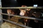 Jos De Clercq - bio vleesveehouder